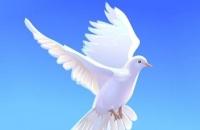 Мастер-класс по изготовлению белого голубя